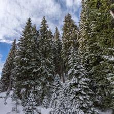 Курорт Пампорово, Зимен Пейзаж, Смолянска област - Снимки от България, Курорти, Туристически Дестинации