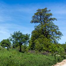 Лозенска Планина, Област София Град - Снимки от България, Курорти, Туристически Дестинации